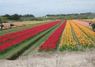 La chapelle de trono n et ses champs de fleurs en pointe finist re - Culture haricot vert plein champ ...