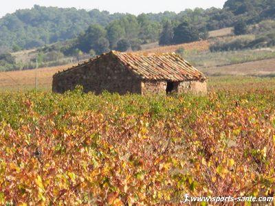 Cruzy au coeur des vignes dans l'H�rault en Languedoc-Roussillon