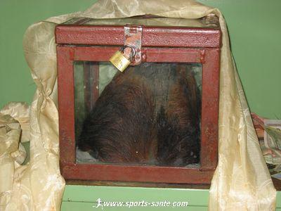 Le scalp du y�ti du monast�re de Khumjung